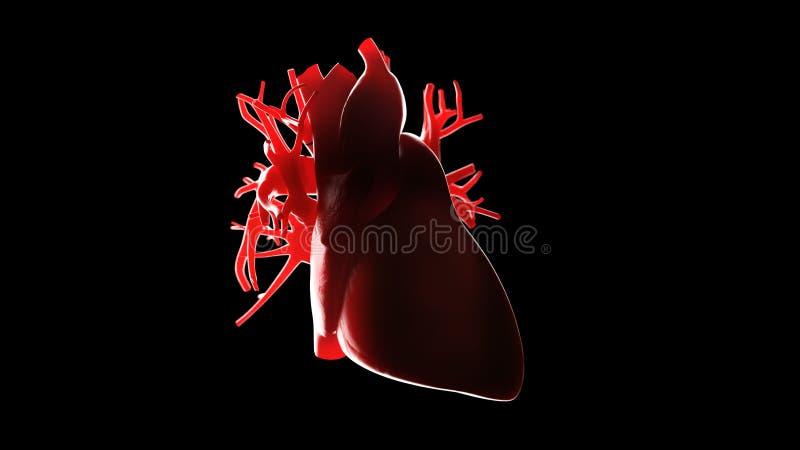 En mänsklig hjärta royaltyfri illustrationer