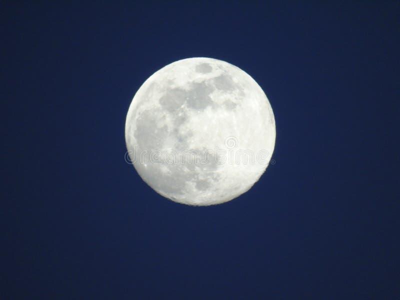En måne över träden fotografering för bildbyråer