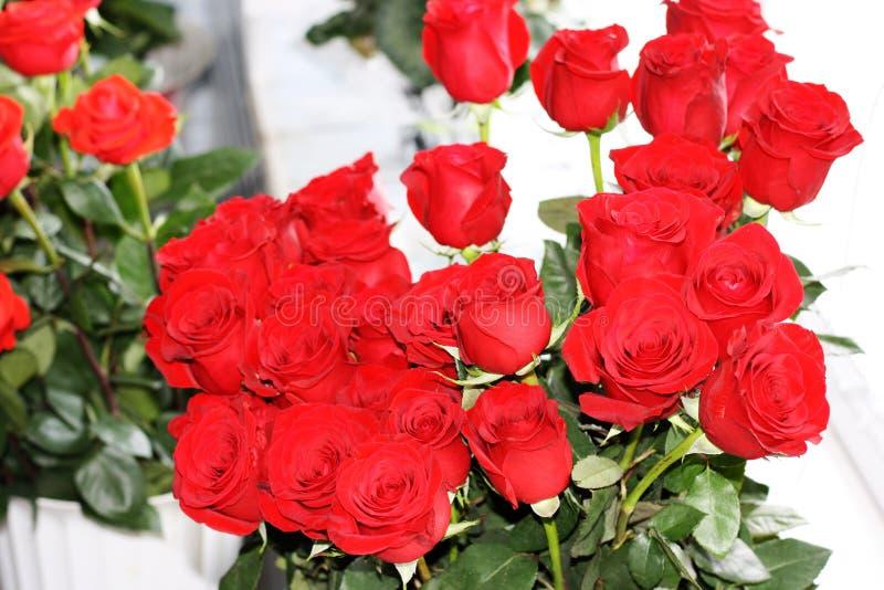 En mörk bukett av att blomma - röda rosor på en ljus bakgrund royaltyfria foton