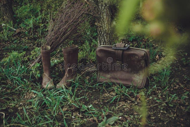 En magisk resa i trädgården fotografering för bildbyråer