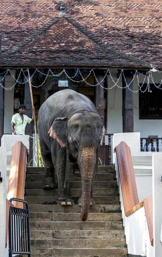 En mahout med hans elefant arkivfoto