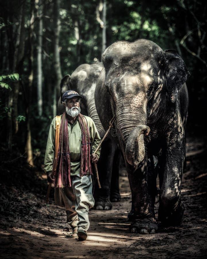 En mahout som går med hans elefant för att gå tillbaka, returnerar, når han har badat fotografering för bildbyråer