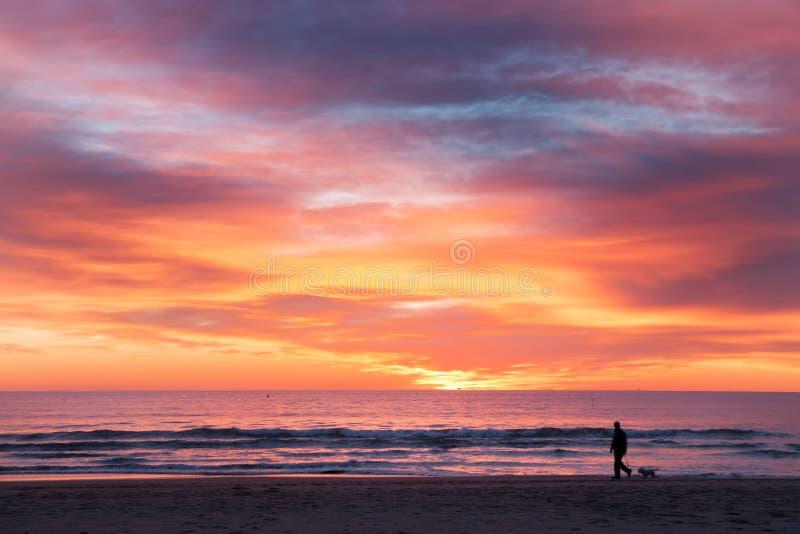 En man en hund som går på stranden royaltyfri foto