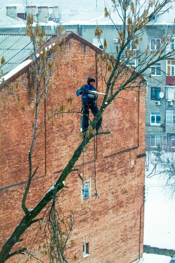 En man med en chainsaw gör att beskära ett träd, klipper av stora filialer arkivbild