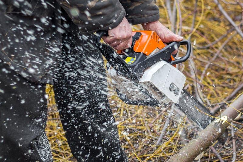 En man med en chainsaw som sågar en journal som gör klar en skog, harvestin arkivbild