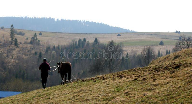 En man med en häst i fältet fotografering för bildbyråer