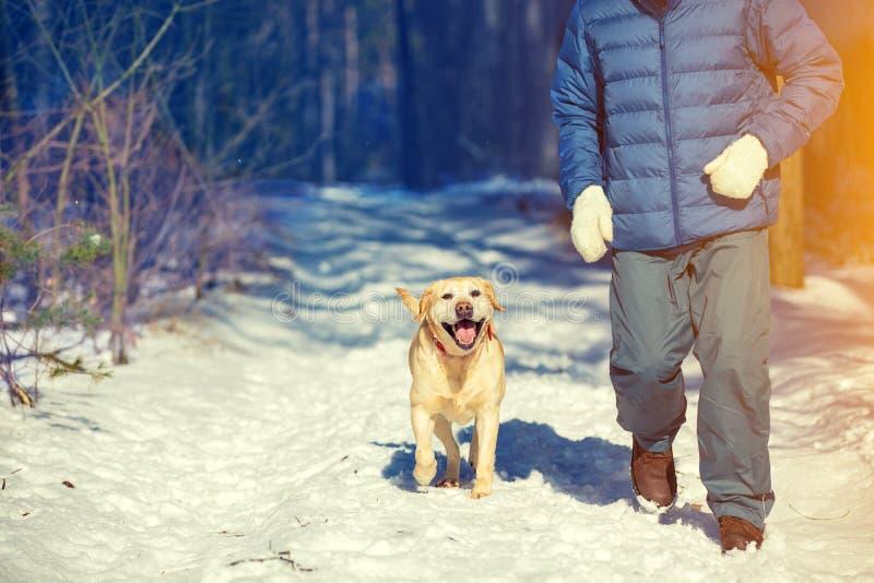 En man med en hundspring i vinterskogen royaltyfria bilder