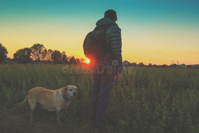 En man med labradorhunden går i fältet på solnedgången royaltyfria bilder
