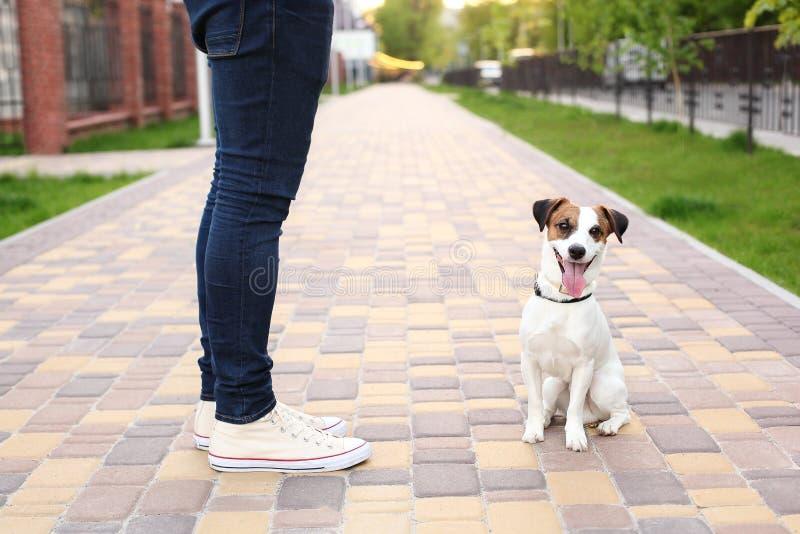 En man och en hund g?r i parkera Sportar med husdjur Konditiondjur Ägaren och Jack Russell går ner gatan, en ob arkivfoton