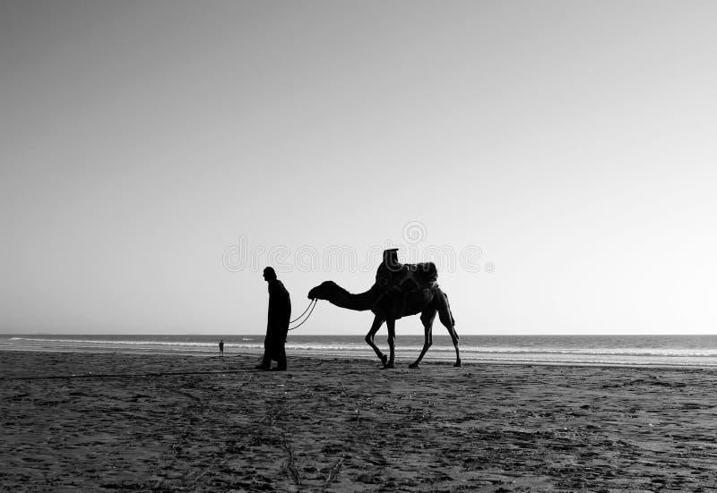 En man och en kamel royaltyfria bilder