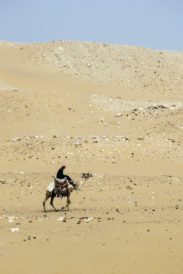 En man rider en kamel i Egypten arkivbild