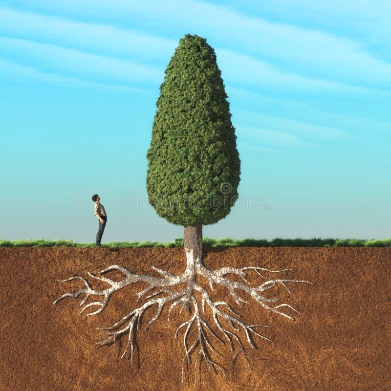 En man ser upp ett stort träd vektor illustrationer