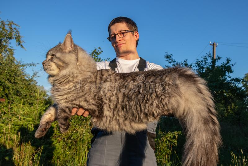 En man som bär exponeringsglas och overaller, rymmer en enorm grå Maine Coon katt royaltyfri fotografi