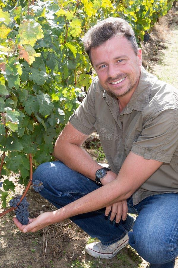 En man som underhåller hans vingård som ler på kameran i druvafälten fotografering för bildbyråer