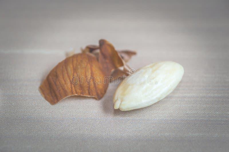 En mandel skalade av huden White Almond Kernel royaltyfri bild