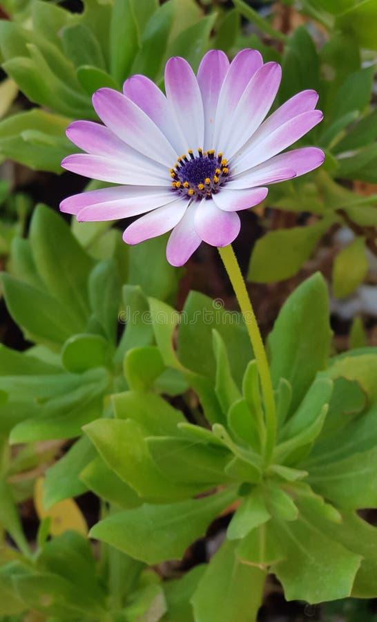 EN mi jardin Vida στοκ εικόνα με δικαίωμα ελεύθερης χρήσης