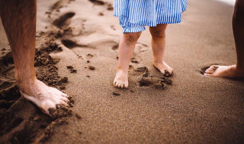 En midsection av föräldrar med litet barndottern som stabding på stranden på sommarferie royaltyfria bilder