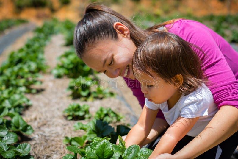 En moder som undervisar hennes barn hur man växer växter och veggies i en trädgård Lyfta och att bry sig för en organisk lantgård arkivfoton