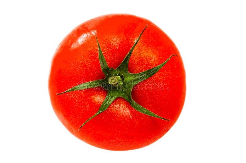 En mogen saftig tomat som isoleras på vit bakgrund arkivbilder
