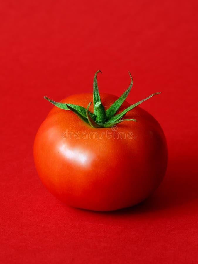 En mogen tomat royaltyfri fotografi