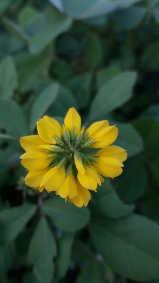 En mycket härlig gul blomma royaltyfri foto
