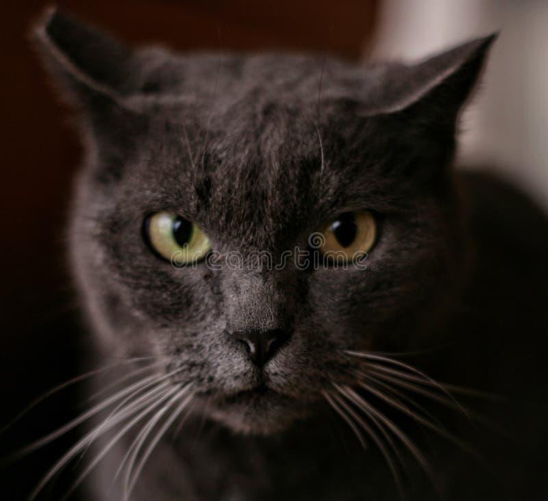 En mycket nyfiken katt! arkivbild