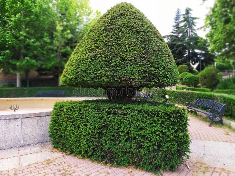 En mycket original- buske i parkerar arkivfoton