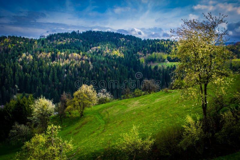 En mycket trevlig vårdag En sikt av de härliga vårlandskapen och de blåa himlarna i bakgrunden royaltyfri foto