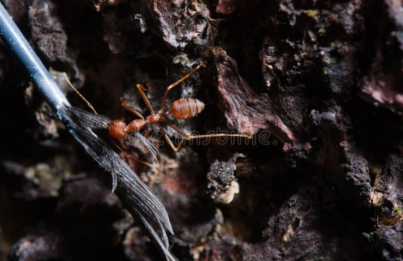 En myra fick en fjäder fotografering för bildbyråer