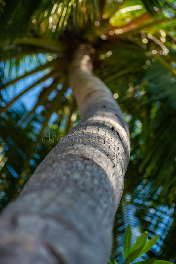 En mystisk atmosfär med gömma i handflatan i djungeln, exotiska trän royaltyfri bild