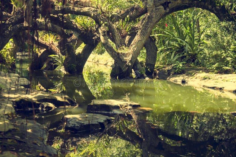 En mystisk bild av landskapet i djungeln royaltyfri bild