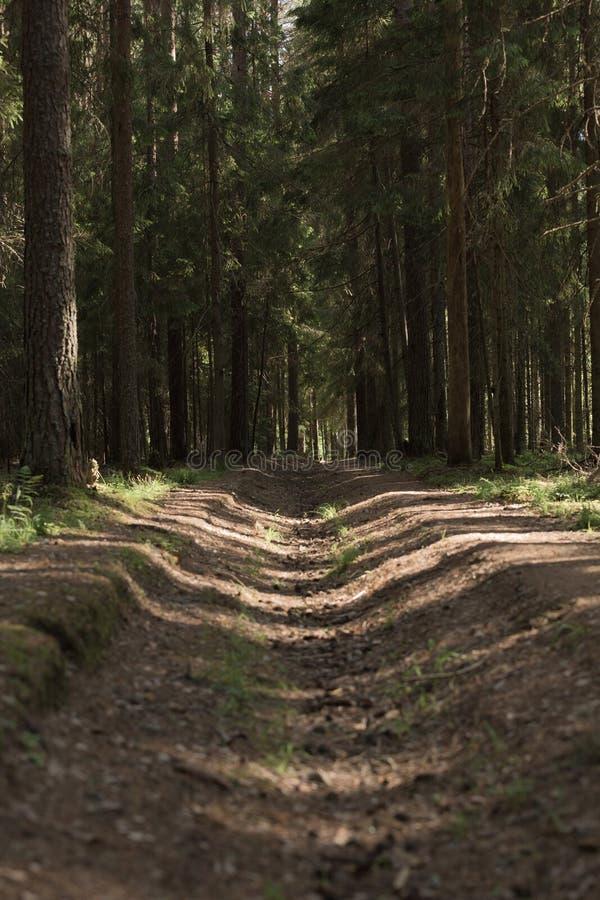 En mystisk väg i den täta magiska skogen för sommar royaltyfria foton