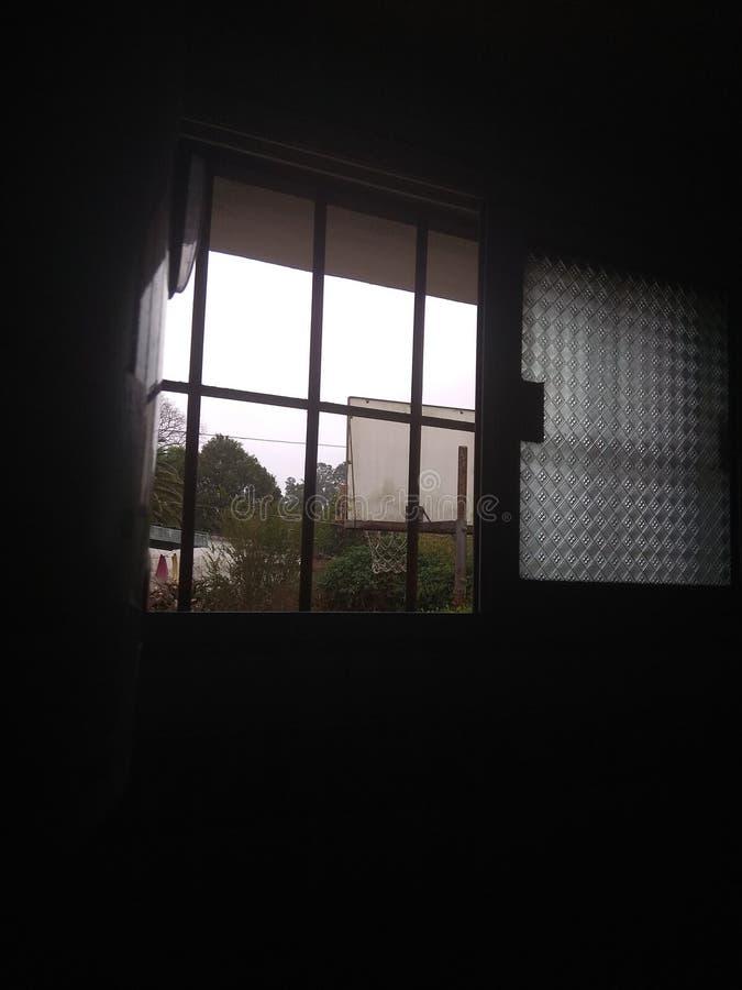 En nära sikt av min trädgård från fönstret arkivbilder