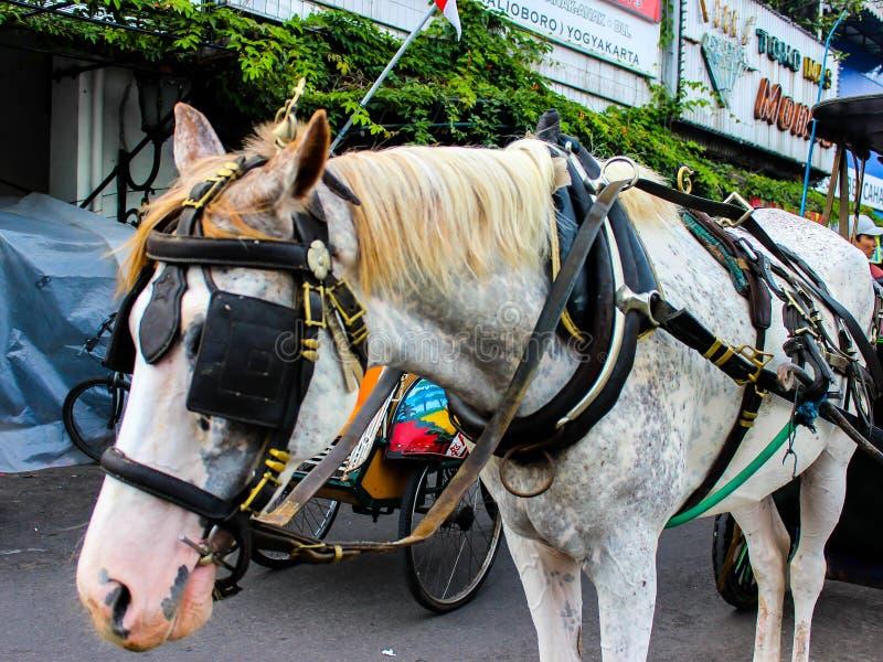 En närbildsvåda på en del av en delmansk häst royaltyfri bild