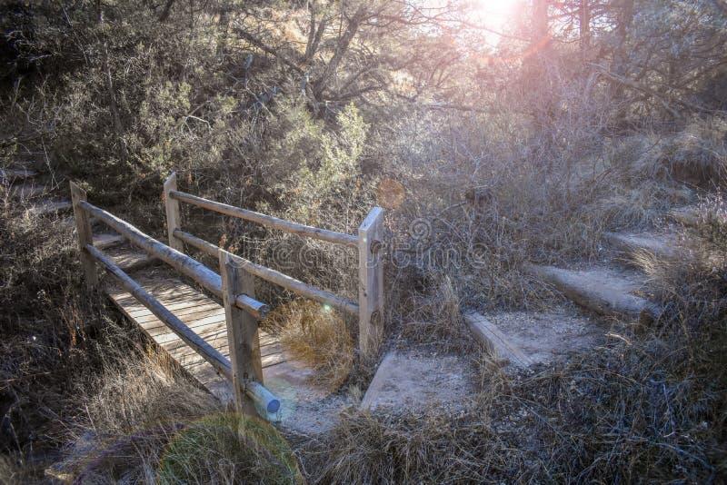 En naturlig bro i skogen fotografering för bildbyråer