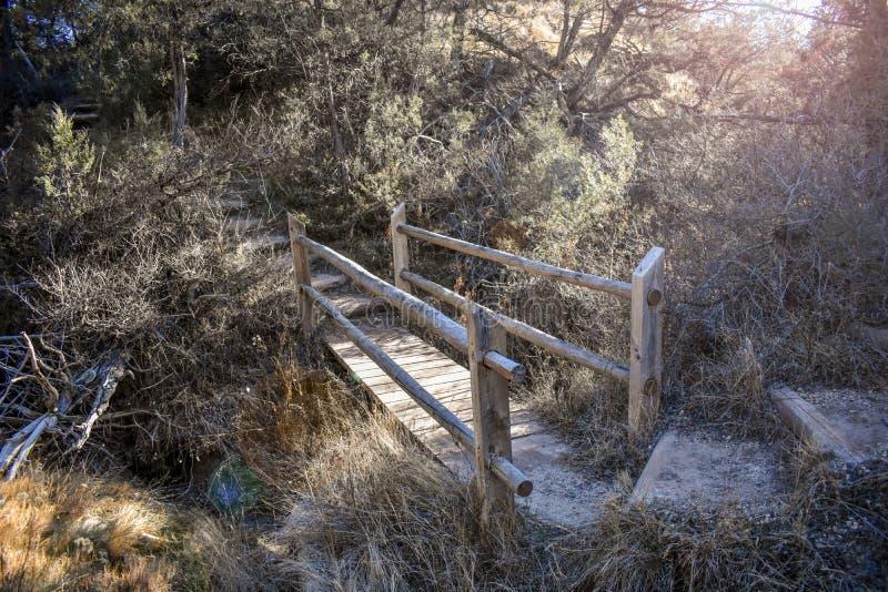 En naturlig bro i skogen arkivbild