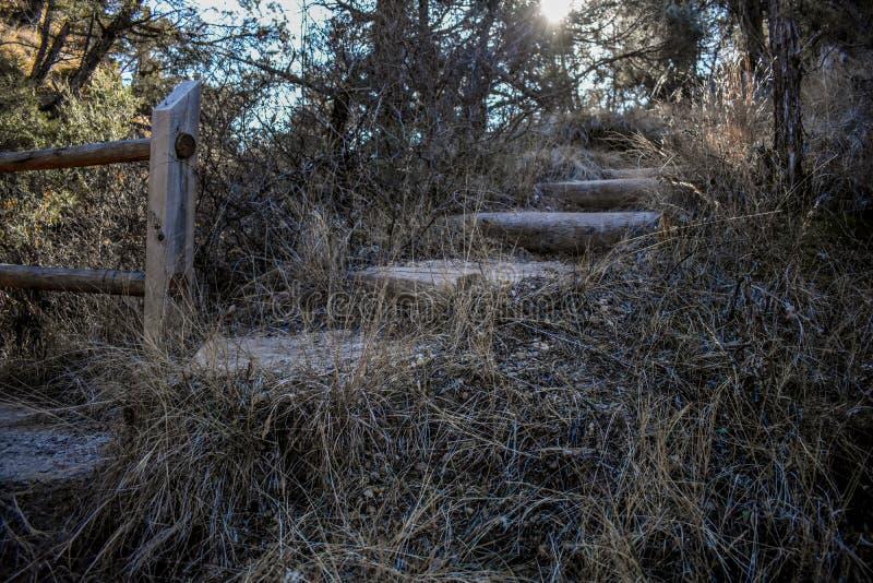 En naturlig bro i skogen royaltyfria bilder