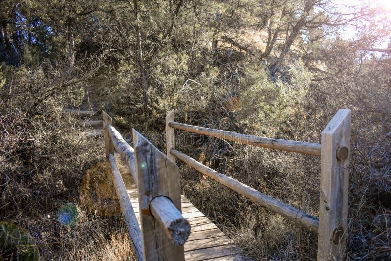 En naturlig bro i skogen royaltyfri fotografi