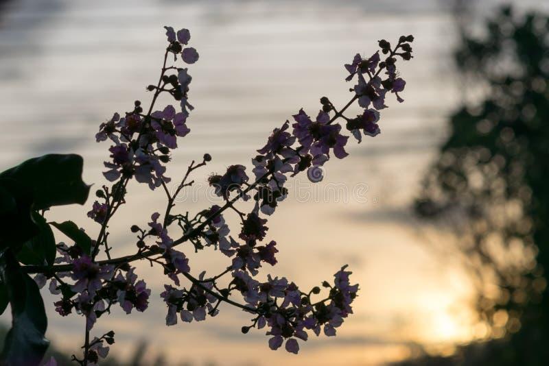 En ny blomma av dagen, arkivfoto
