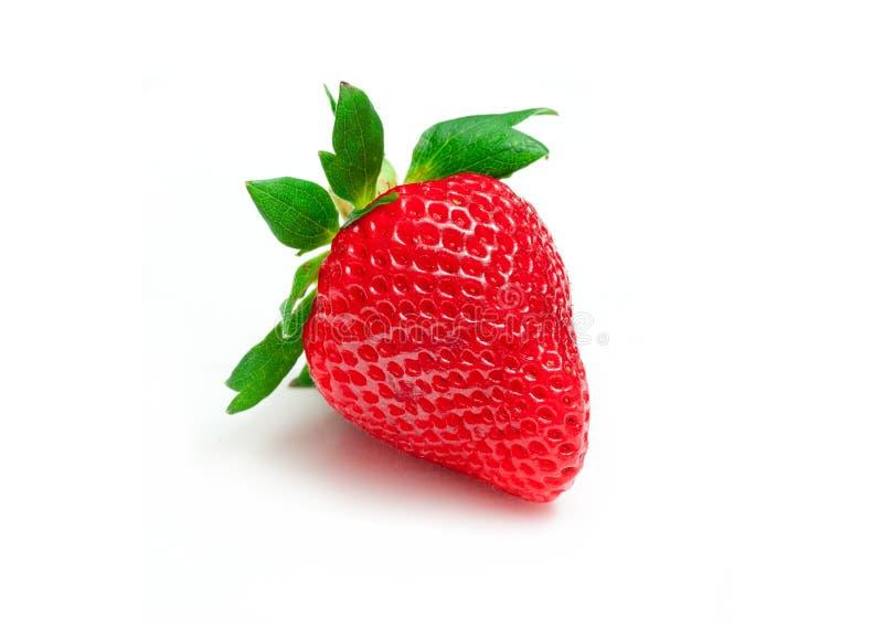 En ny jordgubbe royaltyfri fotografi
