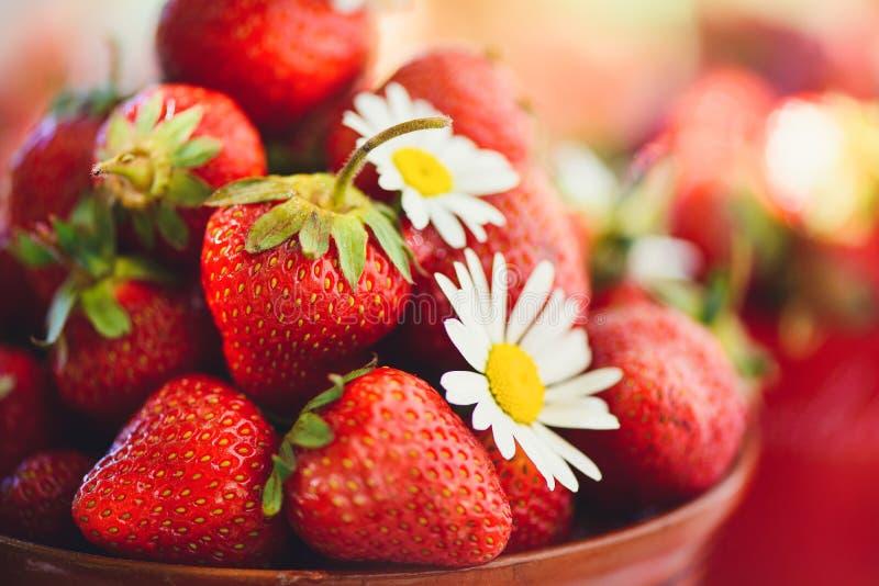 En ny jordgubbe i en bunke på en tabell i en sommarträdgård smyckas med kamomillblommor med en låg nyckel- etapp äta som är sunt fotografering för bildbyråer