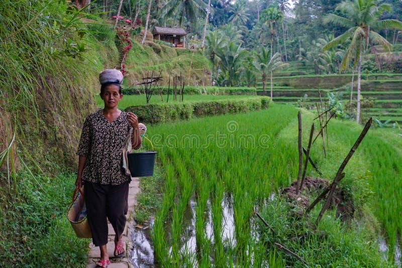En oidentifierad bonde för Balinesekvinnaris poserar under en morgons arbete nära Ubud, Bali, Indonesien, 09 08 2018 royaltyfri bild