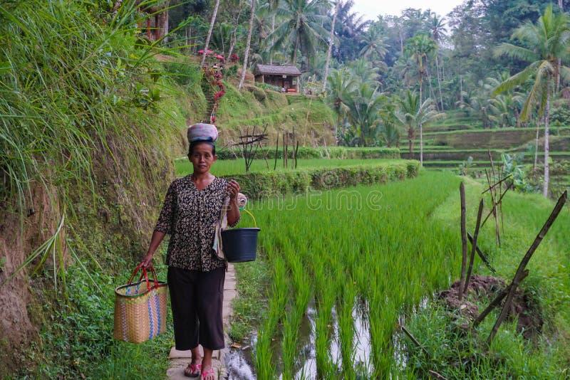 En oidentifierad bonde för Balinesekvinnaris poserar under en morgons arbete nära Ubud, Bali, Indonesien, 09 08 2018 fotografering för bildbyråer