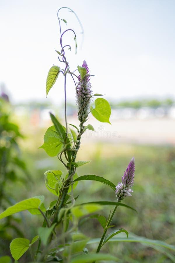 En okänd blomma som finnas i de lilla fälten royaltyfri bild