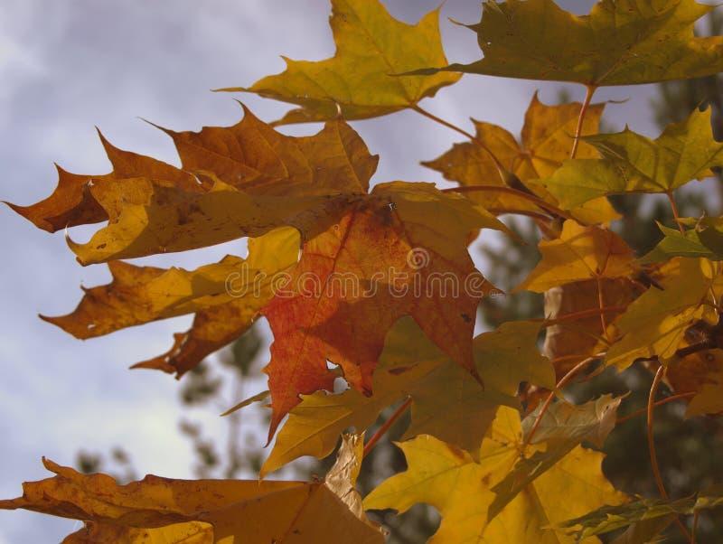 En opnieuw de herfst stock afbeelding