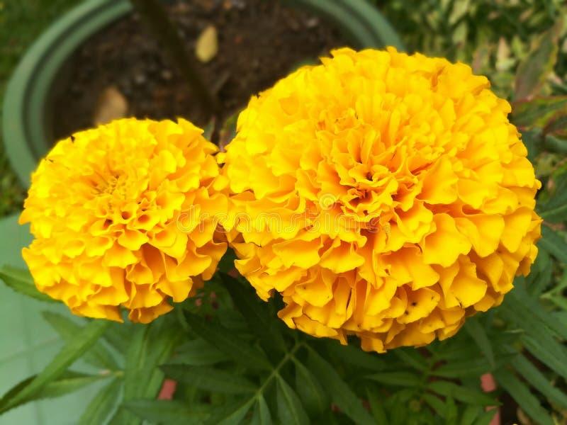 En orange blomma royaltyfria bilder