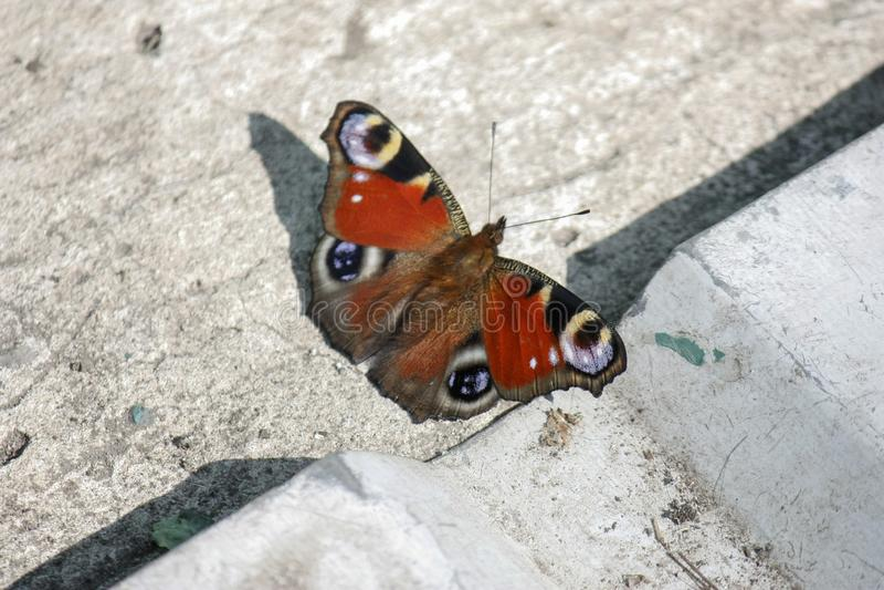 En orange fjäril sitter på betong under sommardagen N?rbild arkivfoton