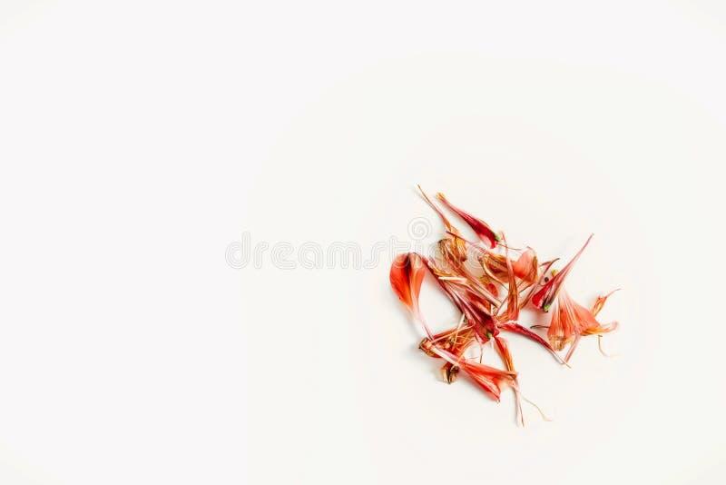 En ordning av stupade röda kronblad från en enkel vårblommabukett royaltyfria foton