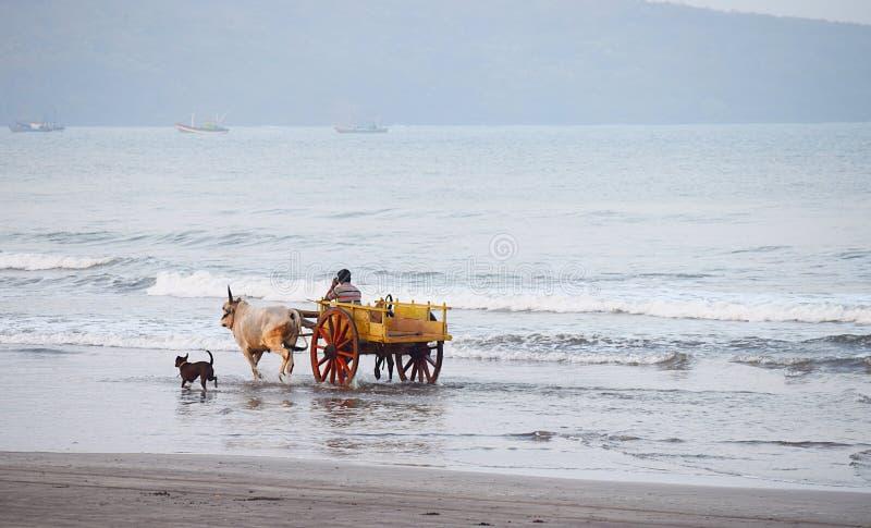 En oxevagn och en hundspring i havsvatten på en strand arkivbild