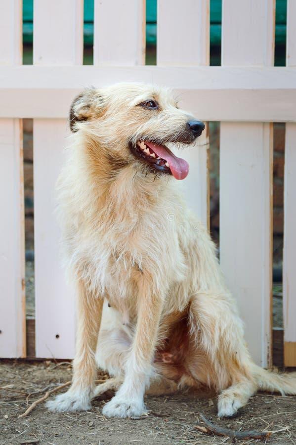 En päls- hund för byracka av ljus färg sitter på gatan och väntar på dess förlage Vertikal fotografi arkivbild